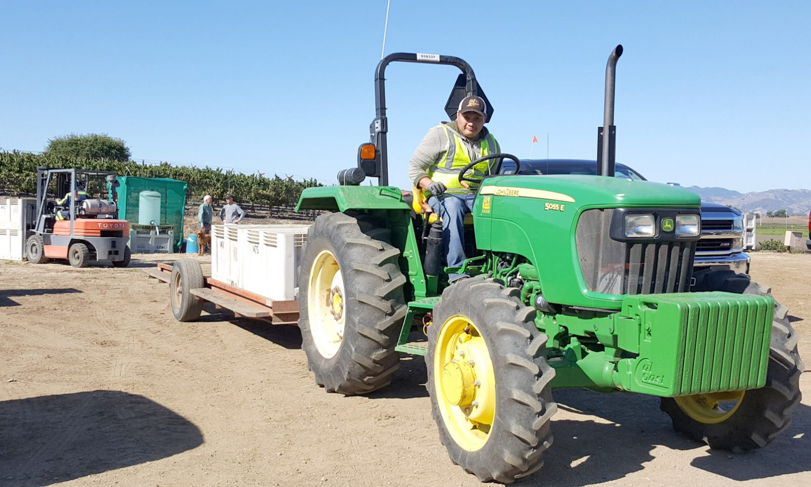 Worker hauling crates of grapes with a green tractor