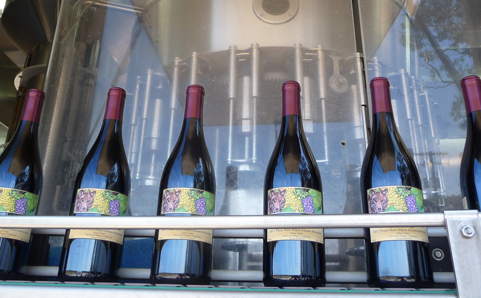 Wine bottles in production, showing finished winte bottles coming off of the bottling line